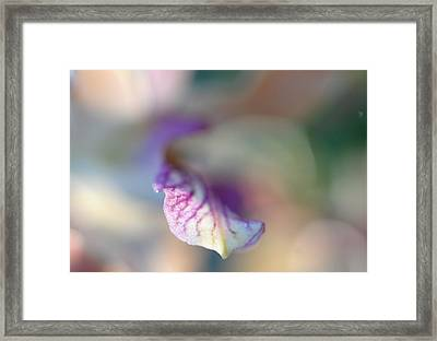 Sensual Touch Of Exotic. Orchid I Framed Print by Jenny Rainbow