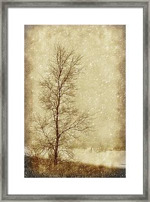 Sentinel Tree In Winter Framed Print by Nikolyn McDonald
