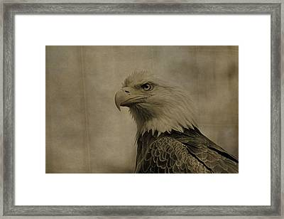 Sepia Bald Eagle Portrait Framed Print by Dan Sproul