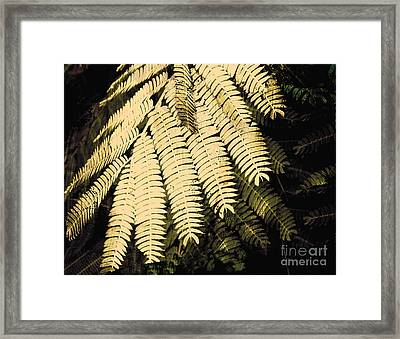 Sepia Fern  Framed Print by Ann Powell