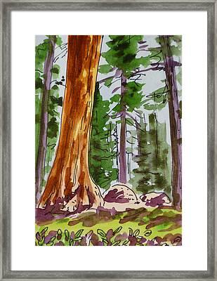 Sequoia Park - California Sketchbook Project  Framed Print by Irina Sztukowski