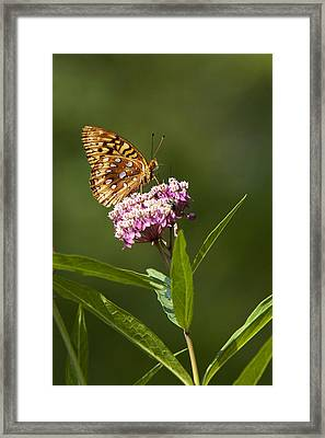 Serendipity Butterfly Framed Print by Christina Rollo
