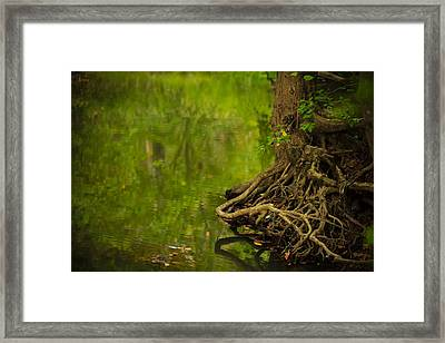 Serene Stream Framed Print by Shane Holsclaw