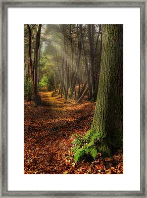 Serenity Of The Forest Framed Print by Bill Wakeley