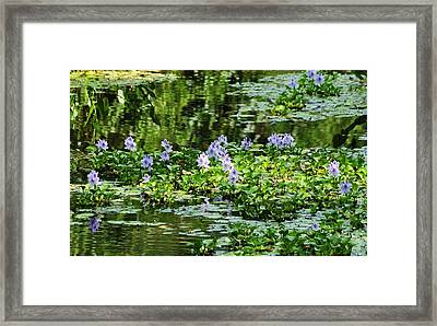 Serenity Unfolds Framed Print by Kicking Bear  Productions