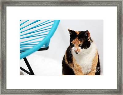 Serious Cat Framed Print by John Rizzuto