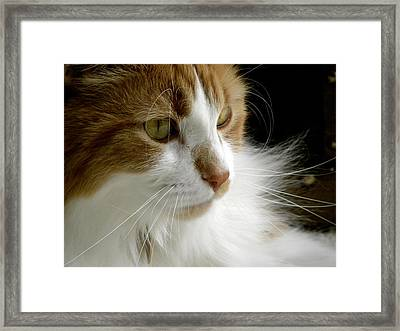 Serious Gato 1 Framed Print by Julie Palencia