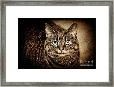 Serious Tabby Cat Framed Print by Andee Design