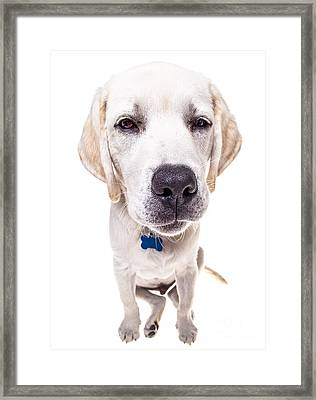 Seriously? Framed Print by Diane Diederich