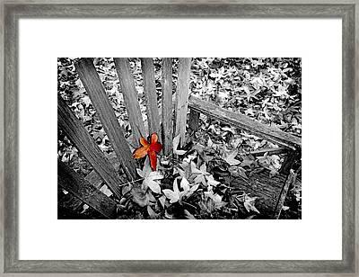 Set Apart Framed Print by Bonnie Bruno