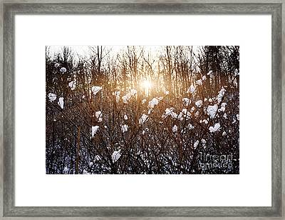 Setting Sun In Winter Forest Framed Print by Elena Elisseeva