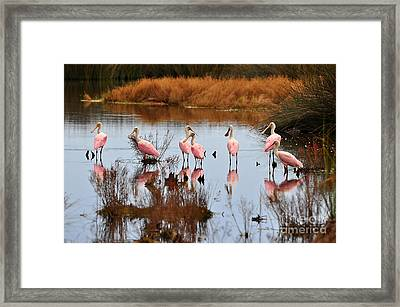Seven Spoonbills Framed Print by Al Powell Photography USA
