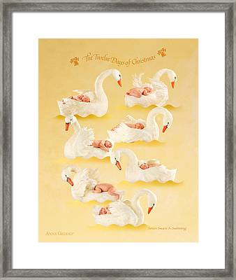 Seven Swans-a-swimming Framed Print by Anne Geddes