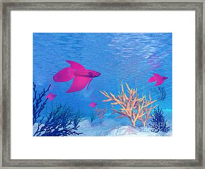 Several Red Betta Fish Swimming Framed Print by Elena Duvernay