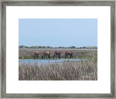 Shackleford Horses And Friends 3 Framed Print by Cathy Lindsey