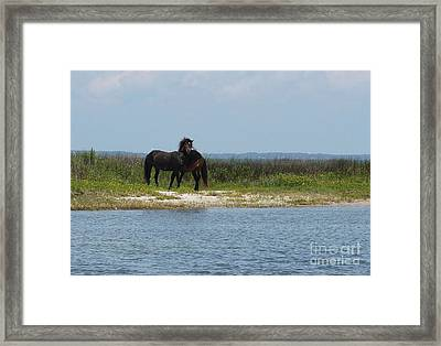 Shackleford Ponies 3 Framed Print by Cathy Lindsey