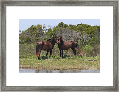 Shackleford Ponies Framed Print by Cathy Lindsey