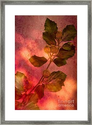 Shades Of Autumn Framed Print by Jan Bickerton