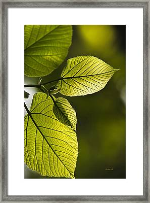 Shades Of Green Framed Print by Christina Rollo