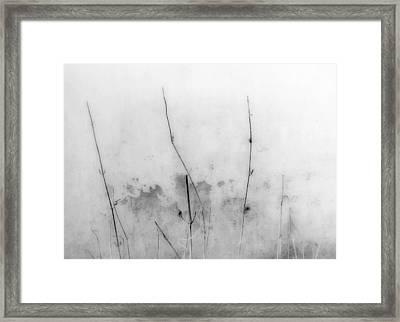Shades Of Grey Framed Print by Prakash Ghai