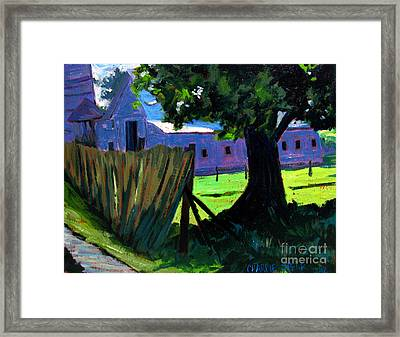 Shadey Maple 104 Framed Print by Charlie Spear