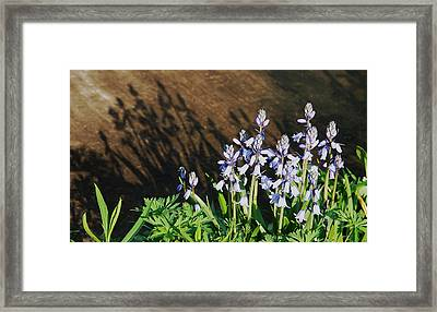 Shadows Framed Print by Aimee L Maher Photography and Art Visit ALMGallerydotcom