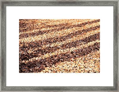 Shadows On The Leafy Forest Floor Framed Print by Natalie Kinnear