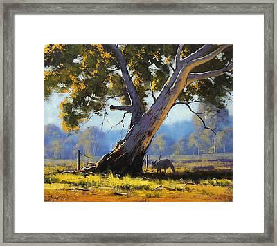 Shady Tree Framed Print by Graham Gercken