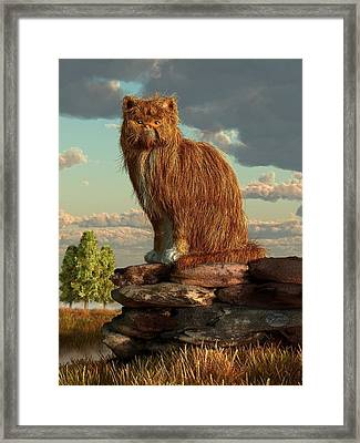 Shaggy Cat Framed Print by Daniel Eskridge