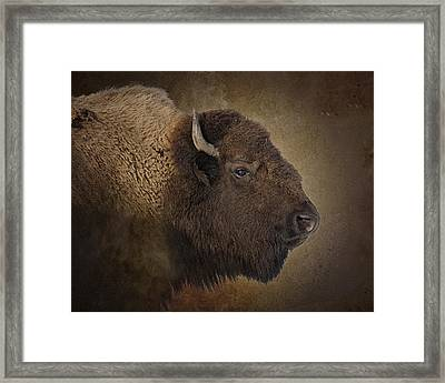 Shaggy One Framed Print by Ron  McGinnis