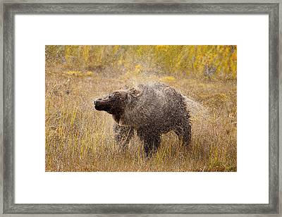 Eat Free Framed Print featuring the photograph Shaking Dry by Tim Grams