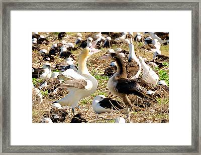 Shall We Dance Framed Print by F Hughes
