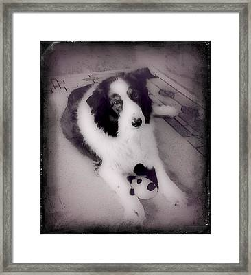 Shandy Framed Print by Shirley Patterson-Wallace