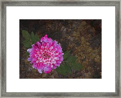 Shapes Of Things Framed Print by Jack Zulli