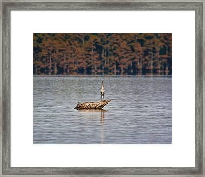 Sharing A Log Framed Print by Jai Johnson