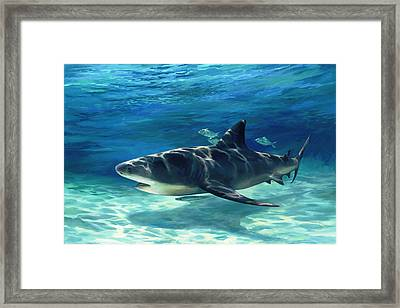Shark In Depth Framed Print by Laurie Hein