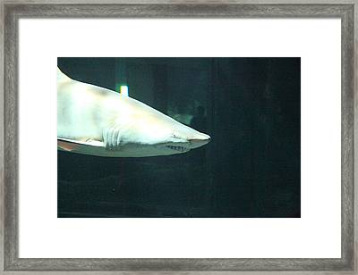 Shark - National Aquarium In Baltimore Md - 12125 Framed Print by DC Photographer