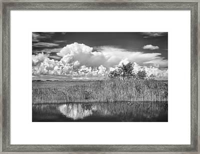 shark river slough BW Framed Print by Rudy Umans