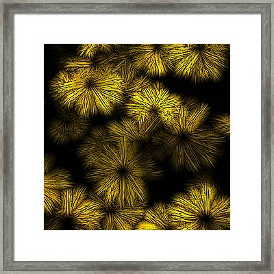 Shattered Daisy 2 Framed Print by Patricia Keith