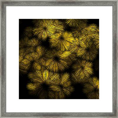 Shattered Daisy 5 Framed Print by Patricia Keith