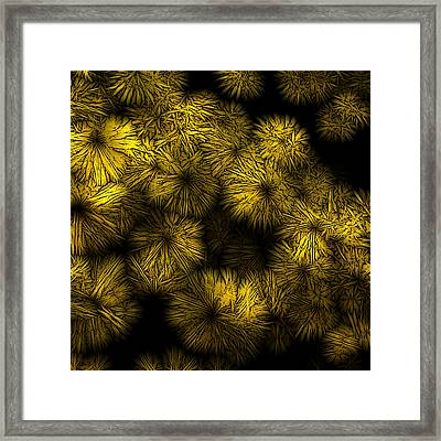 Shattered Daisy 6 Framed Print by Patricia Keith