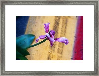 She Did Her Job Framed Print by Joan Bertucci