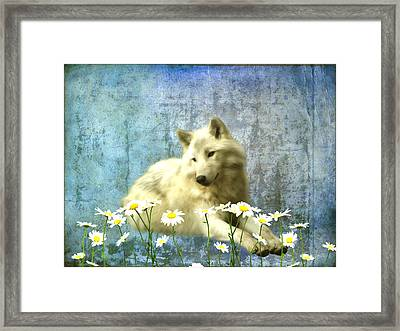 She Wolf Framed Print by Sharon Lisa Clarke