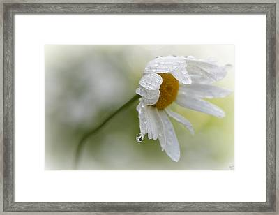 Shedding A Tear Framed Print by Lisa Knechtel