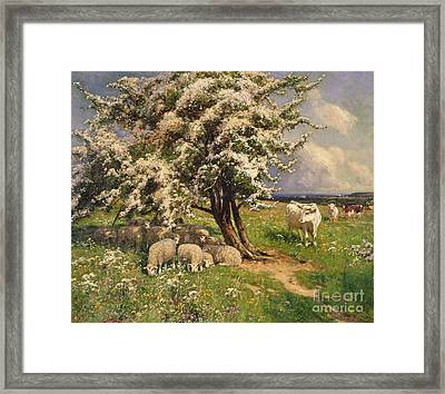 Sheep And Cattle In A Landscape Framed Print by Arthur Walker Redgate