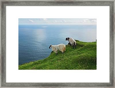 Sheep At Moyteoge Head Bei Dooagh Framed Print by Carl Bruemmer