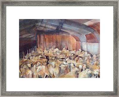 Sheep Herding Framed Print by Lynne Bolwell