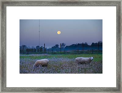 Sheep In The Moonlight Framed Print by Bill Cannon