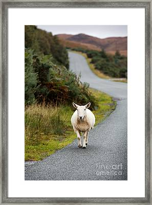 Sheep Framed Print by Jane Rix