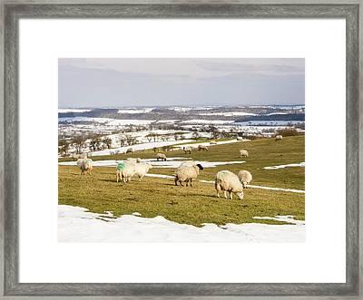 Sheep On Hope Bowdler Hill Framed Print by Ashley Cooper